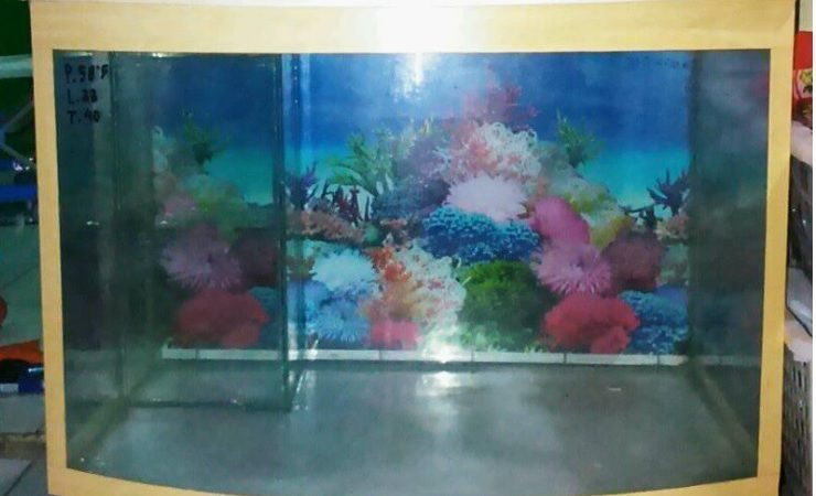 Jasa servis aquarium ikan hias